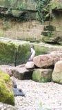 Un pinguin dans un zoo image stock