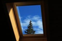 Un pino che trascura la finestra Immagini Stock Libere da Diritti