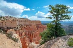 Un pino sul bordo, Bryce Canyon, Utah immagini stock libere da diritti