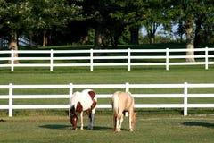 Un pinto et chevaux d'un palomino Image stock
