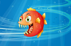 Un piranha rouge sous la mer Images stock