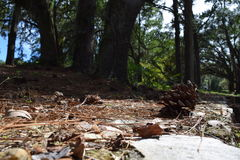 Un piso del bosque Imágenes de archivo libres de regalías