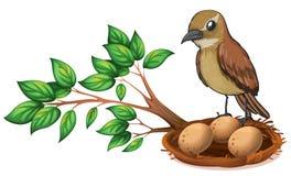 Un pájaro en la rama de un árbol que mira la jerarquía Imágenes de archivo libres de regalías