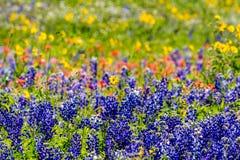 Un plan rapproché a bourdonné vue d'un beau champ couvert avec des Wildflowers photos stock