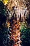 Un plan rapproché d'un arbre exotique image libre de droits