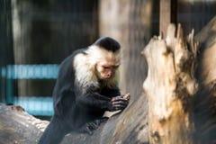Un plan rapproché d'un singe photo libre de droits
