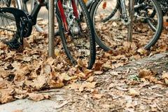 Un plan rapproché d'une roue des bicyclettes dans un feuillage jaune ou d'or d'automne photographie stock libre de droits