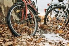 Un plan rapproché d'une roue des bicyclettes dans un feuillage jaune ou d'or d'automne photographie stock