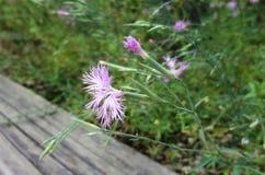 Un plan rapproché de fleur Image stock