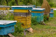 Un plan rapproché de quatre ruches des fleurs bleues et jaunes se tenant dedans photo stock