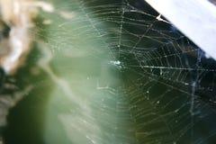 Un plan rapproché de toile d'araignée du tissage d'araignée photo libre de droits