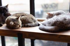 Un plan rapproché de visage de chat de sommeil photographie stock
