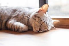 Un plan rapproché de visage de chat de sommeil images libres de droits