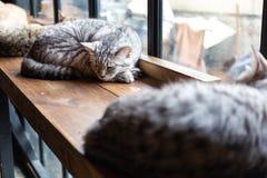 Un plan rapproché de visage de chat de sommeil photographie stock libre de droits