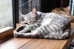 Un plan rapproché de visage de chat de sommeil photo libre de droits