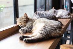 Un plan rapproché de visage de chat de sommeil image libre de droits