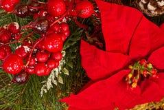 Un plan rapproché des décorations de Noël avec la verdure, les poinsettias, et les baies rouges images stock