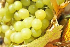 Un plan rapproché des raisins Photos libres de droits