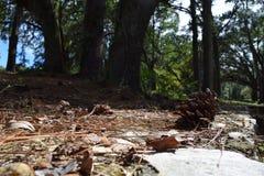 Un plancher de forêt Images libres de droits