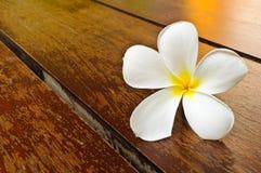 Un plumeria blanc sur l'étage en bois photo stock