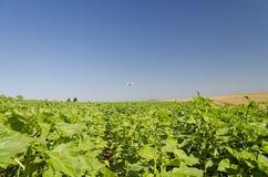 Un plumero agrícola de la cosecha fotografía de archivo libre de regalías