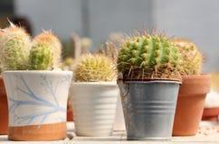 Un poco de pequeño cactus en potes Fotografía de archivo