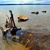 Un poco de rocas y madera de deriva en la orilla del lago Fotos de archivo libres de regalías