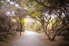 Un poco de trayectoria a través de un túnel de árboles en otoño con las hojas en la tierra en lugar del paraíso Imagen de archivo libre de regalías