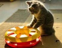 Un poco gatto del latte stava giocando con il suo sole del giocattolo Fotografia Stock