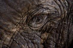 Un poco occhio su un grande elefante fotografia stock