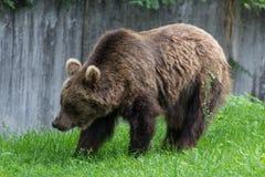 Un poco oso imagen de archivo