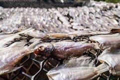 Un poisson l'autre différent Photographie stock
