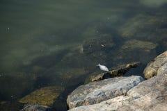 Un poisson mort à la banque de l'océan photographie stock