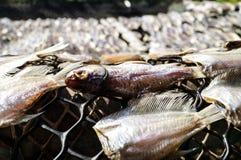 Un poisson a une tête Photo stock