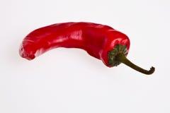 Un poivre de s/poivron d'un rouge ardent. Photographie stock