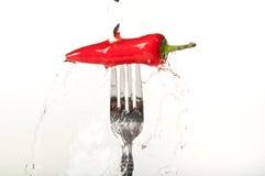 Un /poivron rouge lumineux brillant Photo libre de droits