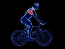 un polmone dei ciclisti illustrazione di stock