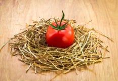 Un pomodoro fresco Fotografia Stock