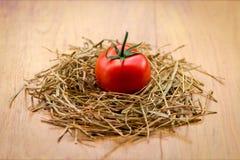 Un pomodoro fresco Fotografia Stock Libera da Diritti