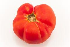 Un pomodoro isolato su bianco Fotografia Stock Libera da Diritti