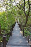 Un pont en bois dans la lanière d'or de fourche de Thung de champ de palétuvier photo libre de droits