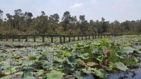 Un pont en pierre dans l'étang de lotus photographie stock