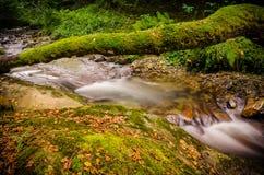 Un pont naturel complètement de mousse a formé par le tronc d'un arbre tombé au-dessus d'une crique Photographie stock