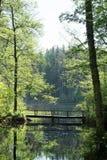 Un ponte di camminata nel lago Fotografia Stock