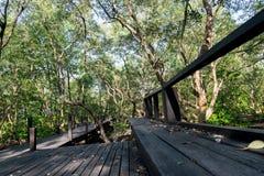 Un ponte lungamente giù all'albero Fotografia Stock Libera da Diritti