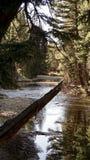 Un ponte ombreggiato dell'oasi della natura Fotografia Stock