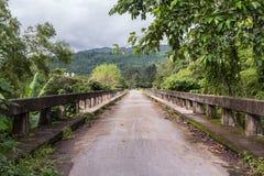Un ponte a vita selvaggia il giorno piovoso fotografia stock libera da diritti