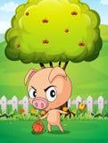 Un porc jouant avec une boule à l'intérieur de la barrière Photos libres de droits