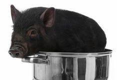 Un porc noir dans un bac image libre de droits