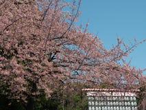 Un portone dell'università di Tokyo delle arti in Ueno, Tokyo immagine stock libera da diritti